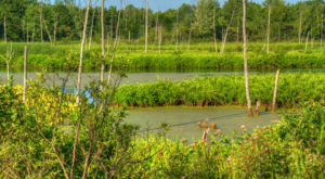 If You Live Near Cleveland, You Must Visit This State Nature Preserve