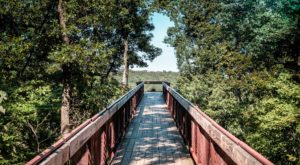 This Canopy Walk In Louisville Will Make Your Stomach Drop