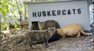The Quirky Place In Nebraska Where Feral Cats Run Wild
