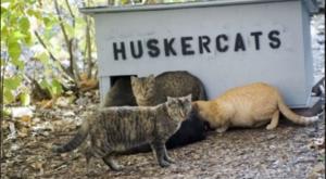The Quirky Place In Nebraska Where Feral Cats Run Wild