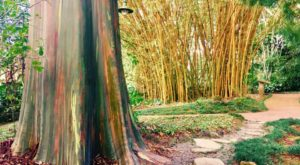 The Hawaii Garden That Will Make You Feel Like You Walked Into A Fairy Tale