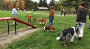 9 Dog-Friendly Places Near Cleveland You'll Absolutely Love