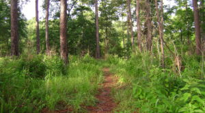 7 Forest Trails In Louisiana That Are Perfect For An Adventurous Summer Day