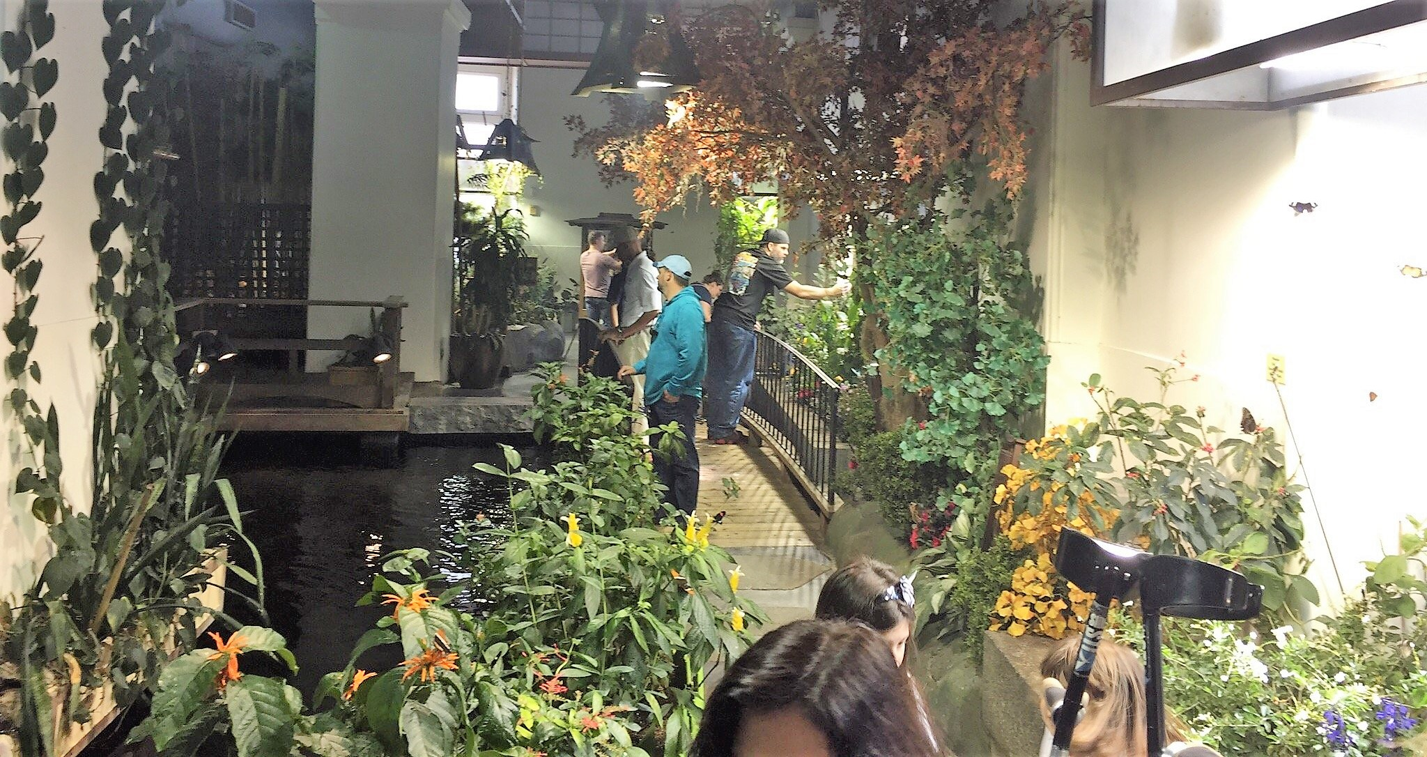Audubon Insectarium Is New Orleans Best Butterfly House