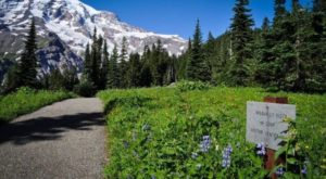9 Amazing Washington Hikes Under 3 Miles You'll Absolutely Love