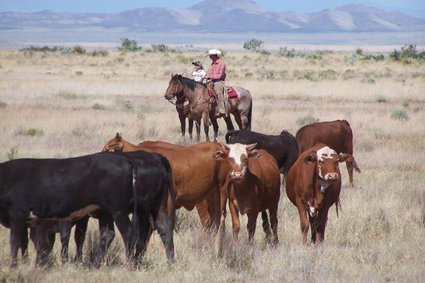 7 Farms And Ranches You Can Stay At In New Mexico