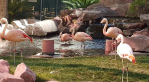 Visit This Nevada Flamingo Habitat For An Unforgettable Day Trip