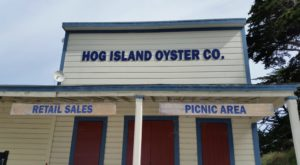 Why People Go Crazy For Oysters In This Small Town In Northern California