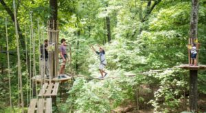 6 Amazing Treetop Adventures You Can Only Have In Virginia