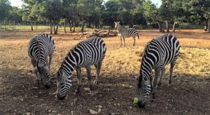 Not Many Know About This Exotic Animal Sanctuary Near Austin