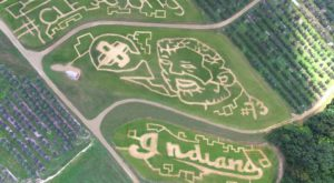 This Cleveland Themed Corn Maze Is Everything You Need For Fall