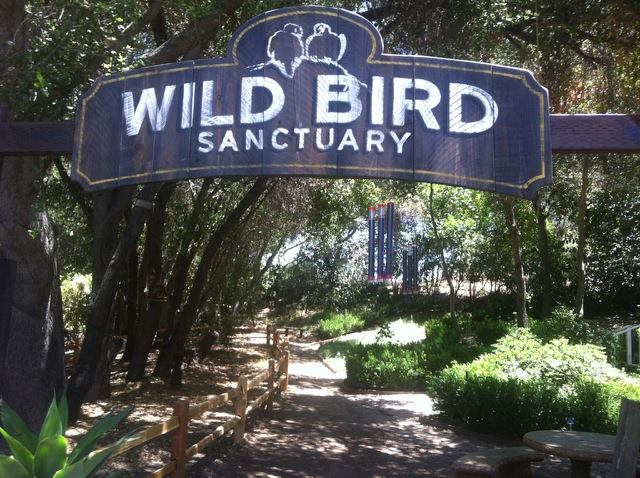 Myrtle Creek Gardens And Nursery Is The Most Beautiful Secret Garden In Southern California