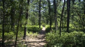 This Overnight Hike In New Jersey Is One Of The Coolest Things You'll Do This Summer