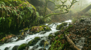 The Hike Near Portland That Takes You To Not One, But TWO Insanely Beautiful Waterfalls