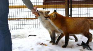 Not Many Know About This Exotic Animal Sanctuary Right Here In Massachusetts