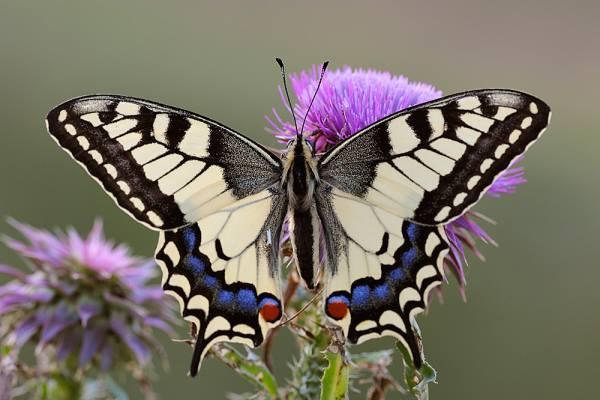 Idlewild Butterfly Farm Is Louisville S Best Butterfly House