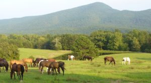 The Charming Virginia Ranch That's Perfect For A Fall Day Trip