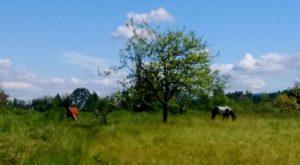 The Horseback Riding Trail Near Portland That's Pure Magic
