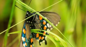 You'll Want To Plan A Day Trip To Northern California's Magical Butterfly House