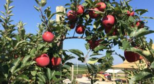 These 6 Charming Apple Orchards Near Cincinnati Are Picture Perfect For A Fall Day