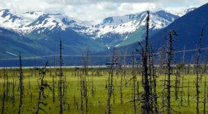 This Ghost Forest Hiding In Alaska Is Hauntingly Beautiful