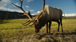 This Conservation Center Is One Of The Best Places To See Wildlife In All Of Alaska