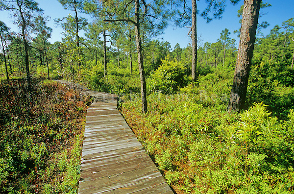 The Incredibly Unique Park Thatu0027s Right Here In North Carolinau0027s Own  Backyard