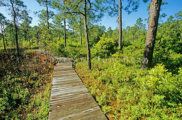 The Incredibly Unique Park Thatu0027s Right Here In North Carolinau0027s Own  Backyard
