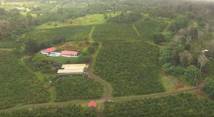 This Charming Little Farm Is The Best Kept Secret In Hawaii