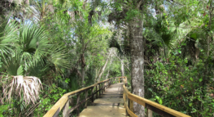 Most People Don't Realize That Florida Has Its Own Amazon And You'll Want To Visit