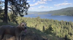 7 Dog Friendly Hiking Trails In Idaho You'll Want To Take