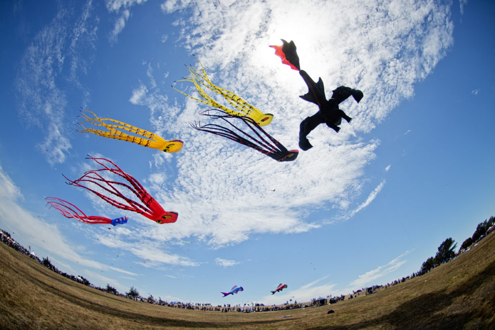 Check Out This Awesome Panoramic Kite >> This Incredible Kite Festival In Oklahoma Is A Must See