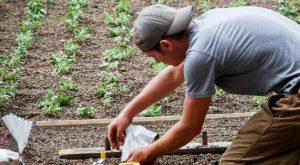 Almost Nobody Knows This Secret Rooftop Garden In Nebraska Even Exists