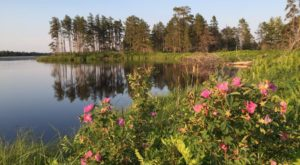 9 Nature Preserves In Michigan That Are Perfect For A Summer Afternoon