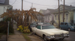 You May Not Like These Predictions About New Orleans' Wild Upcoming Winter