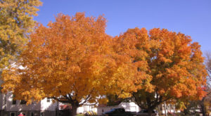Here Are The Best Times And Places To View Fall Foliage In Nebraska