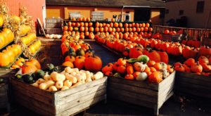 These 9 Charming Pumpkin Patches In Cleveland Are Picture Perfect For A Fall Day