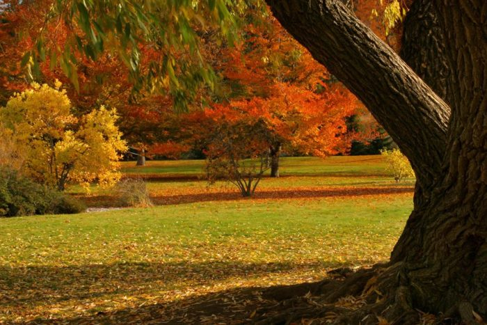 Here Are The Best Times And Places To View Fall Foliage In