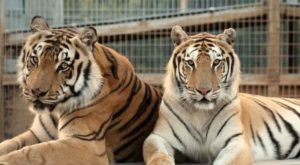 Not Many Know About This Exotic Animal Sanctuary Near Charlotte