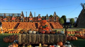 This Buffalo Pumpkin Patch Is One Of The Best In America