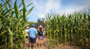 Get Lost In These 13 Awesome Corn Mazes In Massachusetts This Fall