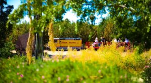 The Orchard Train Ride In Arizona That's Perfect For A Fall Day