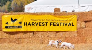 7 Harvest Festivals In Washington That Will Make Your Autumn Awesome