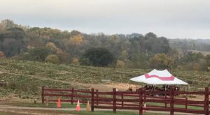 These 5 Charming Pumpkin Patches In Delaware Are Picture Perfect For A Fall Day