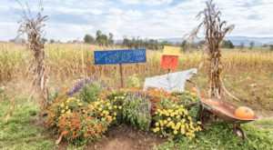 These 7 Charming Pumpkin Patches In West Virginia Are Picture Perfect For A Fall Day