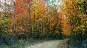 9 Amazing Michigan Fall Hikes Under 3 Miles You'll Absolutely Love