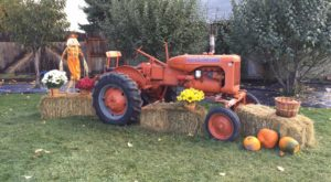 6 Harvest Festivals In Montana That Will Make Your Autumn Awesome