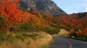 This Dreamy Road Trip Will Take You To The Best Fall Foliage In All Of Utah