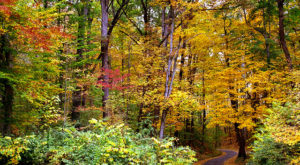 Here Are The Best Times And Places To View Fall Foliage Around Cincinnati