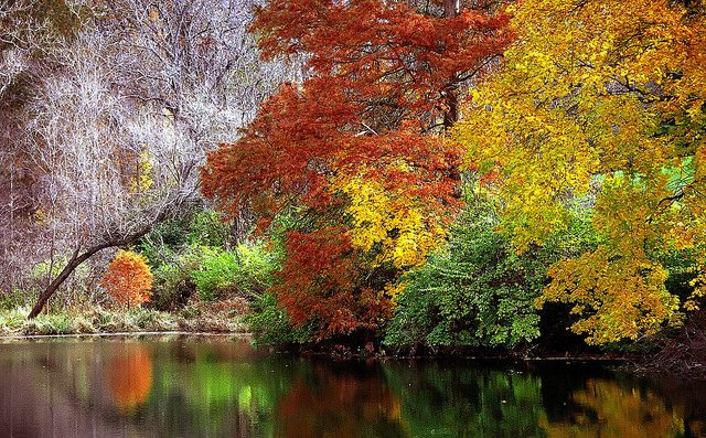 view fall foliage   cincinnati 640 x 397 · jpeg